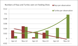 Average Numbers of Rays and Turtles per dive during each count