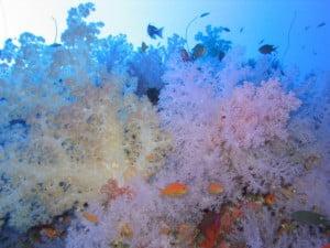 Korosun Dive: white wall