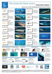 Fiji Shark Count Diving & Inshore Poster