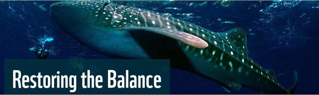 Sharks – Restoring the Balance