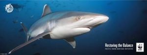 Great Fiji Shark Count into its fifth year