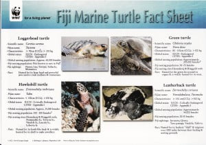 WWF Turtle Fact Sheet