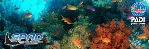 Coral Coast Fiji Premier PADI Dive Centre takes you to the world famous Beqa Lagoon