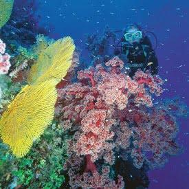 Reef Safari fiji diving