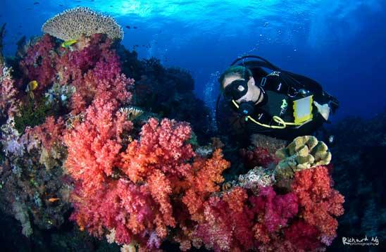 Taveuni Ocean Sports