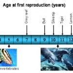 Reproductive ages of different shark species