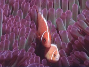 Taveuni Dive, Fiji